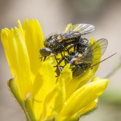 IMG_3097 (angelicalightforall) Tags: wild life nature insects flowers michalzoref michal zoref photography israel 2017 טבע חרקים פרחים ישראל צילום צלמת מיכל צורף מיכלצורף photogrpher phography insect plants צמחים