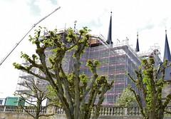 (:Linda:) Tags: germany bavaria franconia town bamberg crane tree spire scaffold church