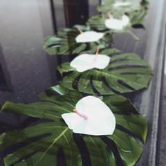 (photographerica) Tags: architecture milano showroom space flower water waterlili