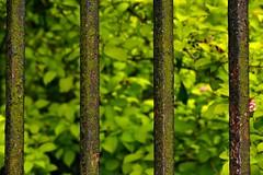 Green Railings (violetchicken977) Tags: gorgeousgreenthursday railings fence flakingpaint