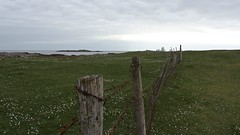 A Fence in Connemara. (mcginley2012) Tags: rust barbedwire wire fence friday green field connemara thewildatlanticway island post nature daisies ireland horizon gorteenbay lichen