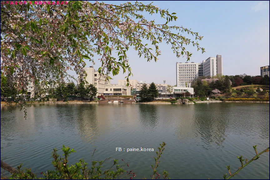 首爾建國大學 (8).JPG