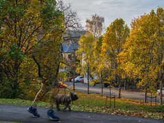 invisible jogger and dog Explore #121 thanks! (Ian@NZFlickr) Tags: autumn dog nz otago dunedin jogger