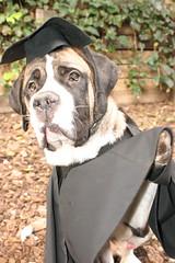 "Aviva Farber Dog Oscar • <a style=""font-size:0.8em;"" href=""http://www.flickr.com/photos/95808399@N03/8758147497/"" target=""_blank"">View on Flickr</a>"