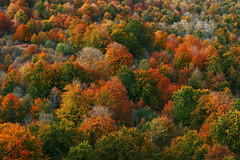 Autumn palette in a forest (Mikel Martnez de Osaba) Tags: autumn red orange color green texture nature beauty leaves horizontal forest season landscape outdoors leaf vibrant background seasonal foliage multicolor