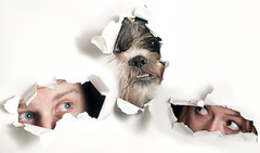 Alternate Family Portrait (abnormallyaverage) Tags: family portrait dog white cute eyes faces teeth shihtzu