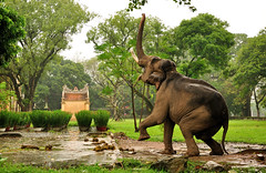 Vietnam (Andi Mezger) Tags: elephant water wonderful amazing nikon asia asien sdostasien eating south great east vietnam huge nikkor hue ost sd d90