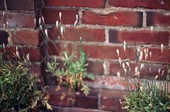 Seeds (ABBY@lovemoka) Tags: plant weed seed
