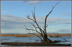 Winton Wetland (PhotosbyDi) Tags: trees lake nature water ecology reeds nikon australia victoria wetlands d600 wintonwetland