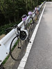 East River Cycling in Nikko 08/17/2013 (EastRiverCycles) Tags: bicycle cycling tokyo 東京 nikko groupride morishita 森下 eastrivercycles イーストリバーサイクルズ 08172013