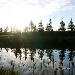 Seeking the light (2 of 5) (Trinimusic2008 - stay blessed) Tags: morning trees light sky sunlight canada water colors thanks clouds reeds colours september alberta bushes gratitude manmadelake 2013 bluebirdestates trinimusic2008 searchingforthelight 201395 judymeikle tedandpeggyshome
