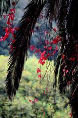 Outono (mgkm photography) Tags: flowers naturaleza flores portugal nature photography photo nikon sintra outono ilustrarportugal nikonflickraward d3100