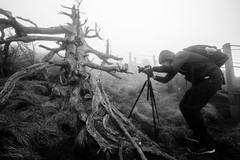 Endangered Korean Fir Trees on Mt. Halla, Jeju Island, South Korea (DMac 5D Mark II) Tags: bw white mist mountain black tree fog landscape korean fir species endangered southkorea jeju halla mthalla