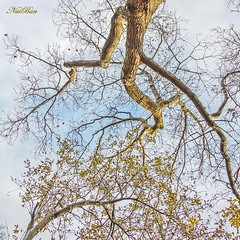 ...trees... (Nataa Bandovi) Tags: park autumn trees sunset sky toronto ontario canada cold fall afternoon canondslr 5dmk2 natasaban natasabandovicphotography natasabandovic