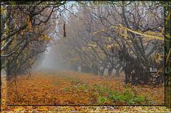 Boira i horta a Utxesa (Blanca Martinez i Ribes) Tags: winter niebla frio autom boira