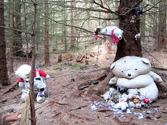Found in woods in Scotland (Tony Worrall) Tags: wood trees cute animals danger found lost toys scotland nice stuffed woods walk bears north scottish creepy hidden cuddly stuffedtoys quirky beasts bearsinthewoods foundinthewoods