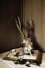 (Ellie Ellis) Tags: old stilllife loss leaves rose vintage dead death skull book petals pretty moody sad mourning deer antlers spooky mysterious horror romantic softfocus dreamy dreamlike atmospheric shallowdepthoffield plainbackground arcangelimages