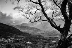 Killarney (Pat Kelleher) Tags: sky bw cloud white mountain black tree nature rock canon landscape grey mono hill 85mm monotone killarney 6d patkelleher patkelleherphotography
