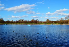 The Serpentine, Hyde Park (HanWhittle) Tags: trees london tourism water birds landscape lakes parks serpentine peddleboats