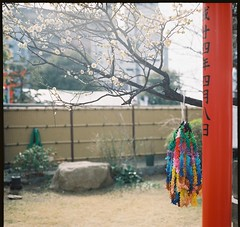 + (Nisa Yeh) Tags: 6x6 japan square 120film kobe pentaconsixtl kodakportra160 80mmf28mcbiometar hyogotsunomichi
