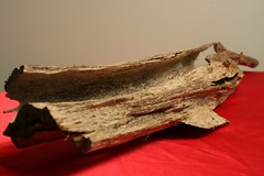 Item B (goldenfield) Tags: goldenfield gfe agarwood aquilaria goldenfieldholdings