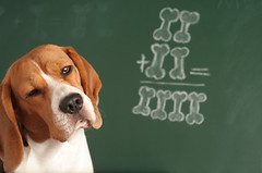 I Am Not Sure (Kristen Anchor) Tags: school dog pet cute beagle smart puppy student education funny classmate canine class thinking math bones learning lesson chalkboard solving studying blackboard answer clever pondering addition algebra considering pedagogy doubting