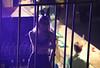 Limassol Carnival  (35) (Polis Poliviou) Tags: limassol lemesos cyprus carnival festival celebrations happiness street urban dressed mask festivity 2017 winter life cyprustheallyearroundisland cyprusinyourheart yearroundisland zypern republicofcyprus κύπροσ cipro кипър chypre קפריסין キプロス chipir chipre кіпр kipras ciprus cypr кипар cypern kypr ไซปรัส sayprus kypros ©polispoliviou2017 polispoliviou polis poliviou πολυσ πολυβιου mediterranean people choir heritage cultural limassolcarnival limassolcarnival2017 parade carnaval fun streetfestival yolo streetphotography living