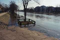 ouse on the rise (Johnson Cameraface) Tags: 2017 march spring olympus omde1 em1 micro43 mzuiko 1240mm f28 johnsoncameraface urban yorkshire york trees riverouse ouse flood tide