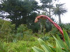 Tresco (gwallter) Tags: tresco scilly isles abbey gardens