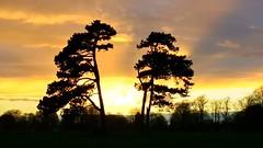 Sunset on the Durdham Downs (hamburg103a) Tags: cliftonanddurdhamdowns downs sunset