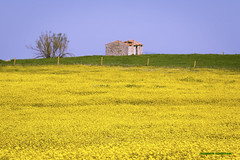 Spain - Cordoba - Añora (Marcial Bernabeu) Tags: marcial bernabeu bernabéu spain españa andalucia andalucía andalusia cordoba córdoba añora campo country valledelospedroches yellow amarillo oldhouse