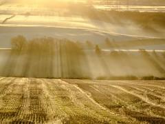 misty_morning_dogwalk_0838-3 (allybeag) Tags: crosby fields morning light mist rays crepuscular inversion misty rising trees shadows golden artyfarty