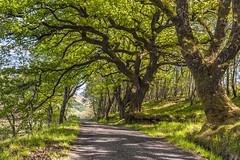 *Spring in Scotland* (albert.wirtz) Tags: scotland schottland riverorchy vereinigteskönigreich unitedkingdom spring frühling albertwirtz orchy orchyriver trees kilchurncastle bridgeoforchy green grün achnafalnich b8074 nikon d700 england rural ländlich road countryroad romantisch