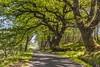 *Spring in Scotland* (Albert Wirtz @ Landscape and Nature Photography) Tags: scotland schottland riverorchy vereinigteskönigreich unitedkingdom spring frühling albertwirtz orchy orchyriver trees kilchurncastle bridgeoforchy green grün achnafalnich b8074 nikon d700 england rural ländlich road countryroad romantisch