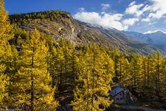 Luce autunnale (cesco.pb) Tags: switzerland svizzera simplonpass alps alpi autumn autunno canon canoneos60d tamronsp1750mmf28xrdiiivcld montagna mountains