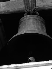 Bell tower (1jonathan1) Tags: blackandwhite parrot bell church monocromo love photography wood sun light blancoynegro animal bird building architecture cartagenadeindias old city travel