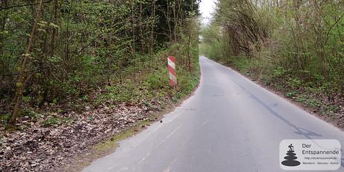 """Die ehemalige """"Panzerstraße"""" im Ober-Olmer Wald"""