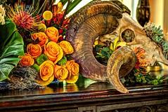ram's skull and flowers (JoelDeluxe) Tags: albuquerque biopark botanical garden nm newmexico joeldeluxe
