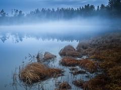 Early morning (andreassofus) Tags: mist misty mistymorning fog foggy lake reflections trees grass spring sunrise morning landscape grandlandscape nature canon outdoor årjäng sweden värmland calm calmness beautiful