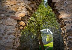 Frühling auf Burg Brandenburg (DS284_HLX) Tags: burgbrandenburg eisenach thüringen burgruine castle