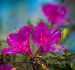 Spring colors - 2017-04-09_03 (Paul and Nalva) Tags: nx500 samsungnx500 opteka85mmf18 rps201706competition