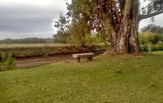 Banco a orillas del río Areco (rrodriguez16) Tags: rarb1950 banco bench stone piedra árbol tree rio river san antonio de areco provincia buenos aires province argentina