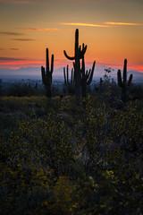 20170320-DSC_4925 (lilnjn) Tags: arizona landscape southwestunitedstates travel unitedstates sky sunrise whitetank