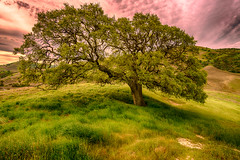 Magic Tree 2 (stuanderson7) Tags: grass sunrise serene nature dawn mountains outdoor hills clouds morning california trees sky green countryside sonya6000 landscape samyang12mmf2