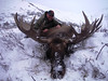 Alaska Dall Sheep Hunt & Moose Hunt 16
