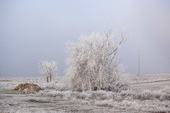 Valladolid. 2016. (Jose_Pérez) Tags: frio helada azul arbol campo cold frost blue tree field