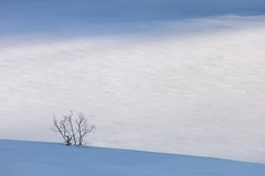 Between Ice, Snow, Light and Shadow (a galaxy far, far away...) Tags: tree snow ice albero neve ghiaccio frozenlake lagoghiacciato winter inverno solitude canon atmosphere mood alps alpen alpi alpine coldumontcenis france savoie outdoor wilderness otherworldly outdoorphotography