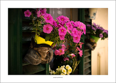 Bootflowers (G. Postlethwaite esq.) Tags: chianti dof italy sonya7mkii sonyalphadslr tuscany beyondbokeh bokeh boots depthoffield flowers fullframe mirrorless photoborder selectivefocus shutters thedailypost emount