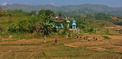 NEPAL, Auf dem Weg nach Pokhara, Bauern bei de Ernte, 16038/8301 (roba66) Tags: reisen travel explore voyages roba66 visit urlaub nepal asien asia südasien pokhara landschaft landscape paisaje nature natur naturalezza landwirtschaft bauern farmer ernte