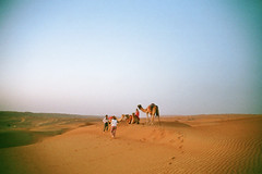 desert dreams (Careless Edition) Tags: photography film desert oman nature landscape camel morning